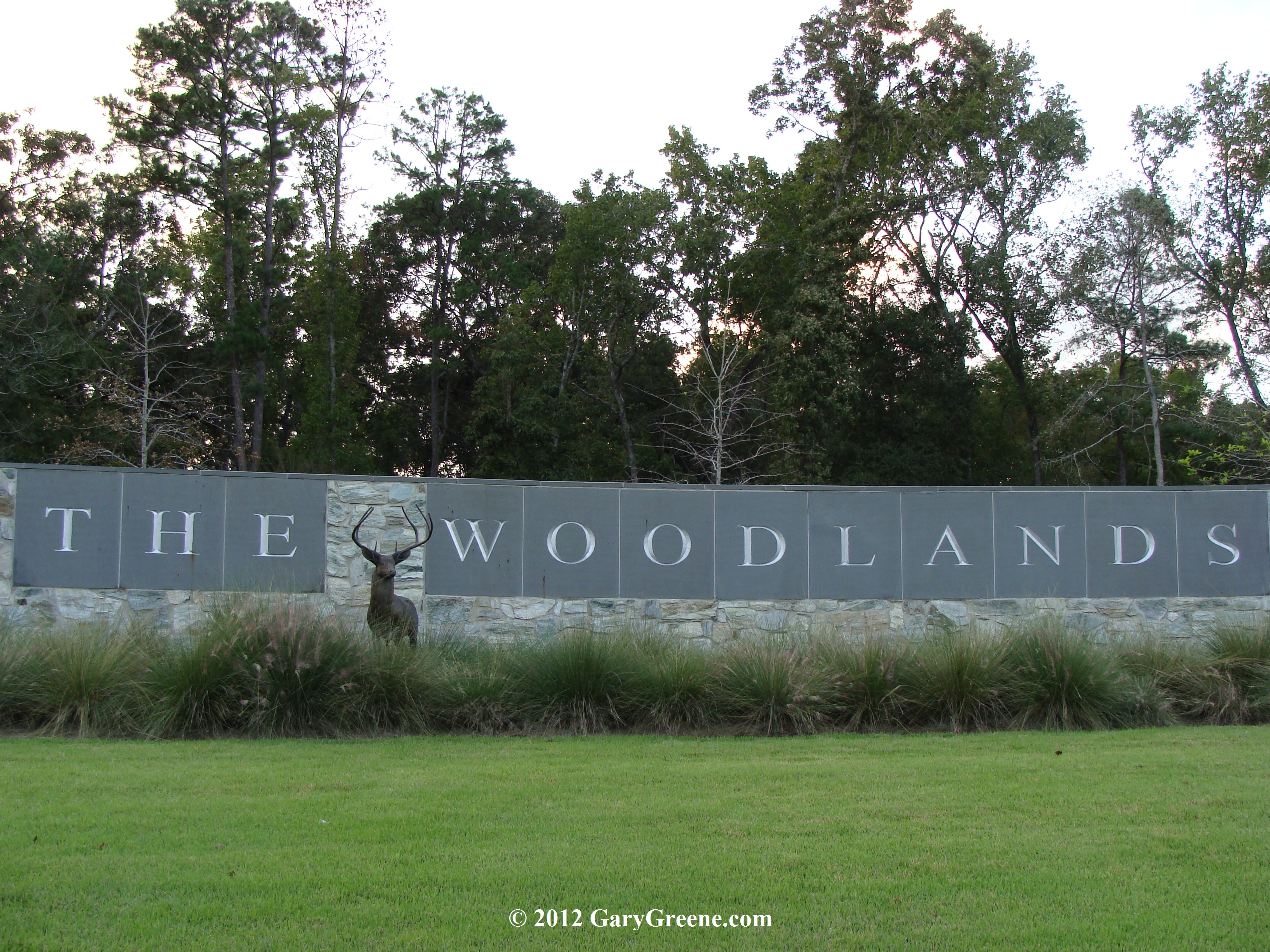 the woodlands singles